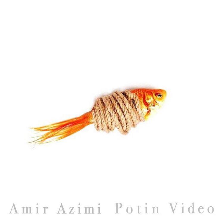 Amir Azimi - Potin
